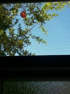 pomegranate above window